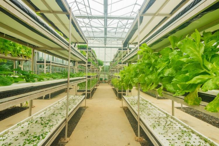 روش کاشت محصول و تاثیر آن بر قیمت گلخانه