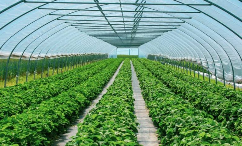 هزینه احداث گلخانه 1000 متری