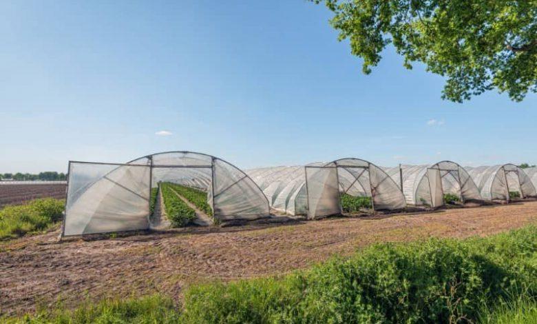 هزینه ساخت گلخانه تونلی